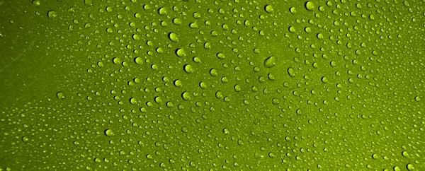 Water drop green